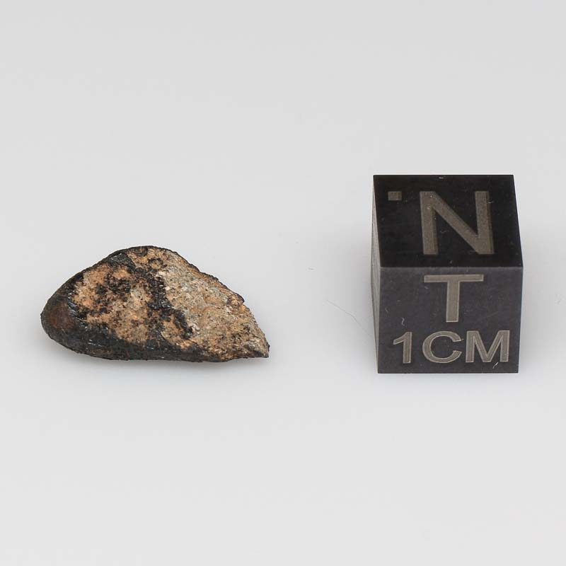 Camel Donga Meteorite For Sale CAMD-50
